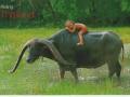 thailand48379-2-jpg